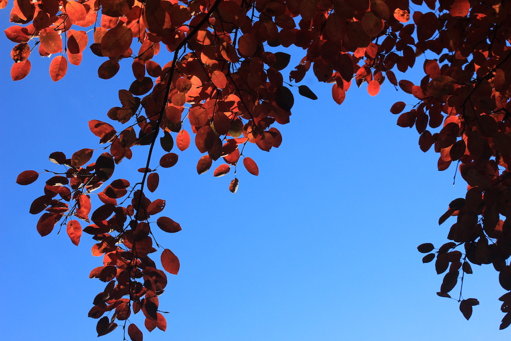 Fall foliage in Isham Park, Inwood, NYC | Photo credit: Rose Spaziani