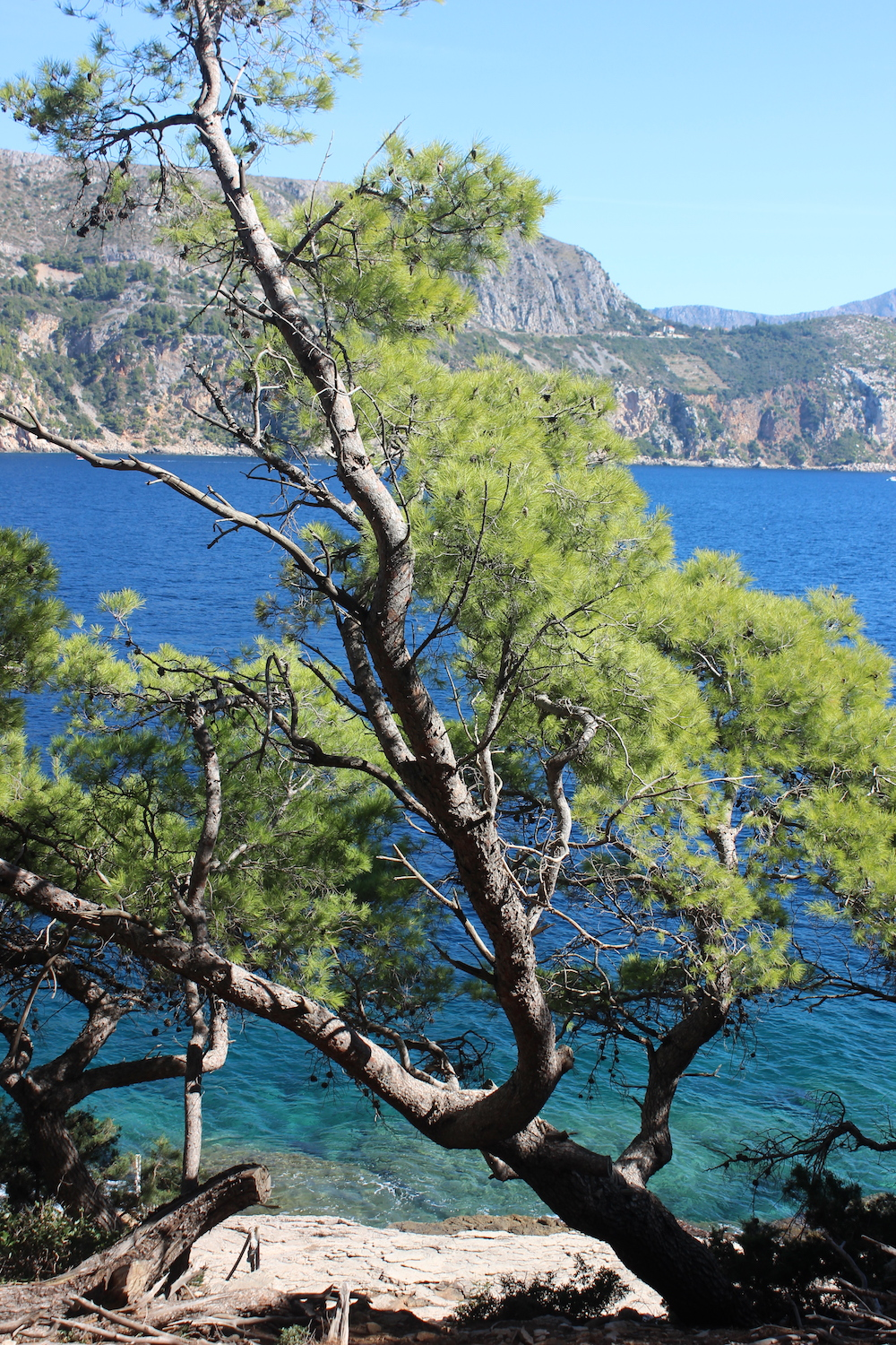 Trees on Lokrum island near Dubrovnik, Croatia | Photo credit: Rose Spaziani