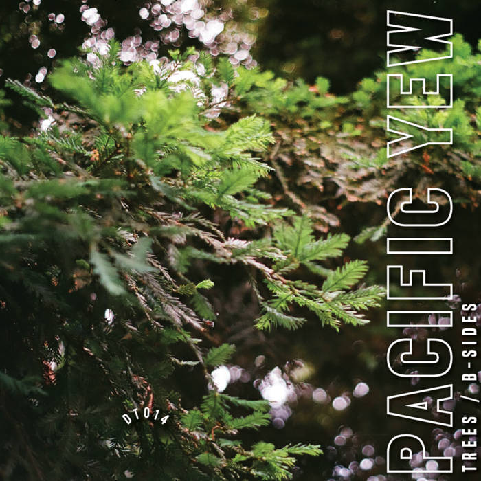 Pacific Yew: Trees / B-Sides