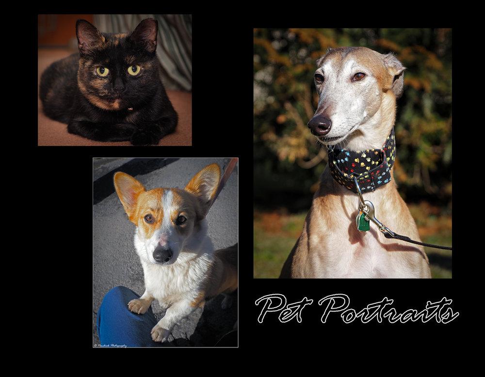 Pets Page.jpg