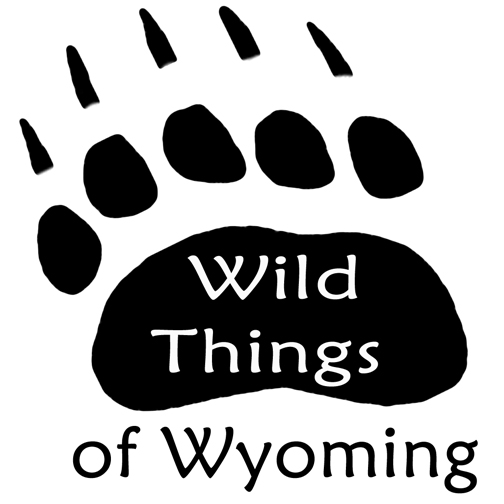 Wild Things of Wyoming