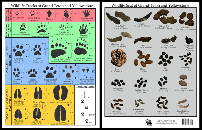 Animal Poop Identification Chart Related Keywords - Animal