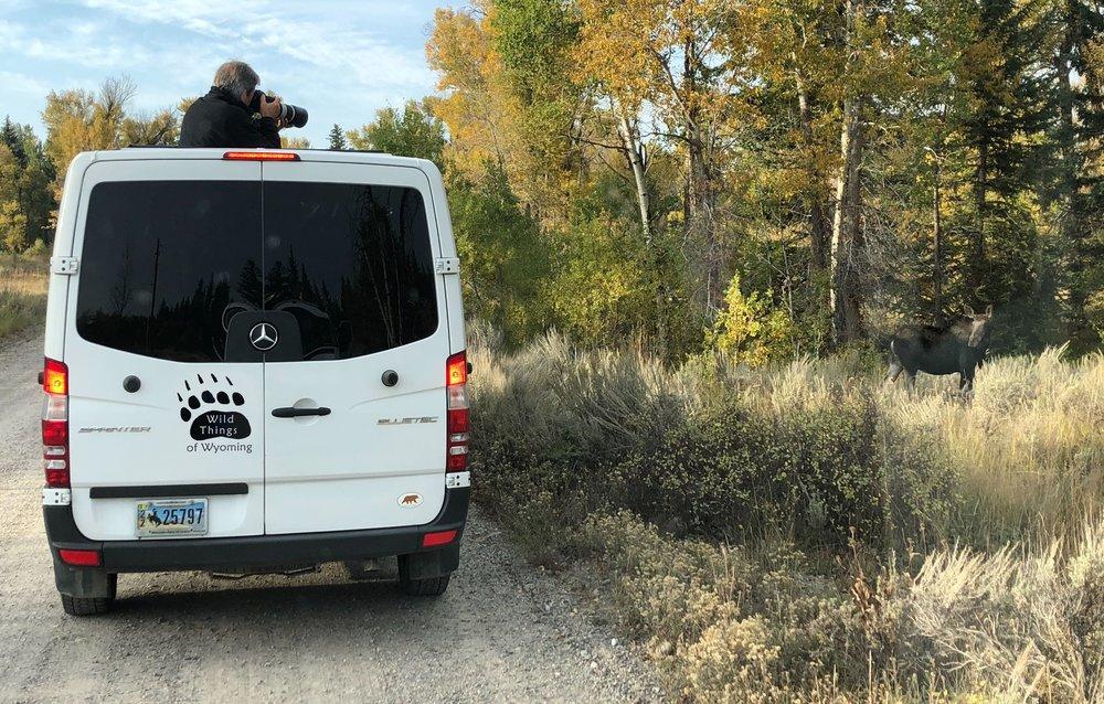 wtow van with moose.jpg