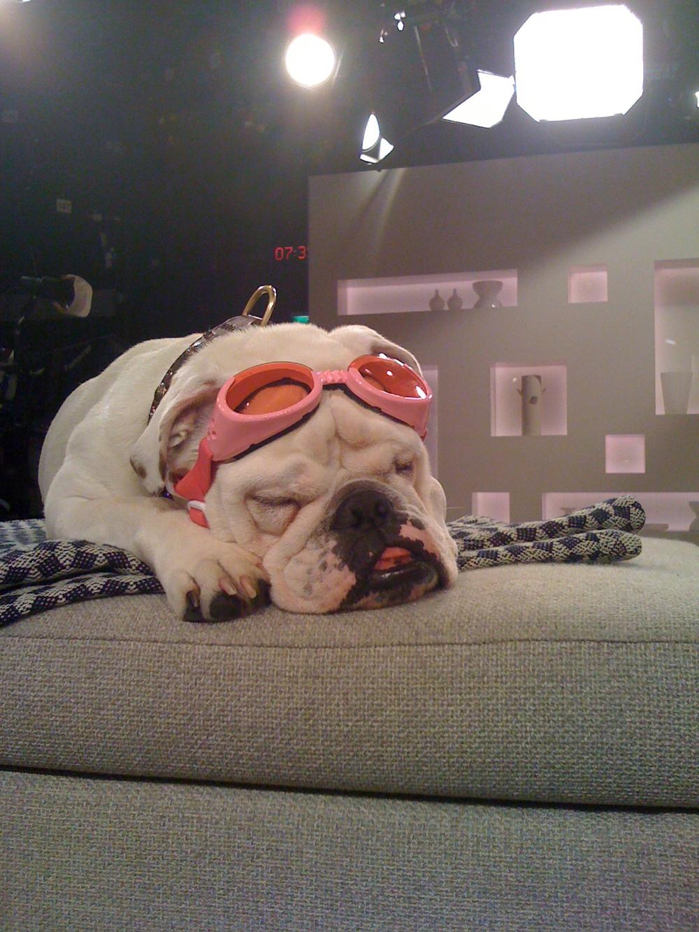 "SAT.1 - Frühstücksfernsehhund ""Lotte"""