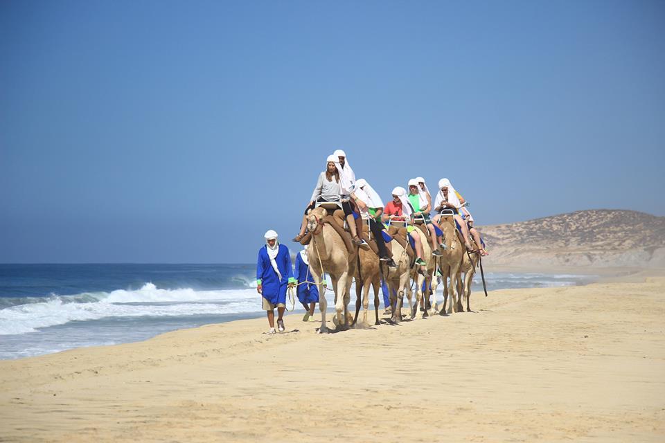 Camels 6.jpg