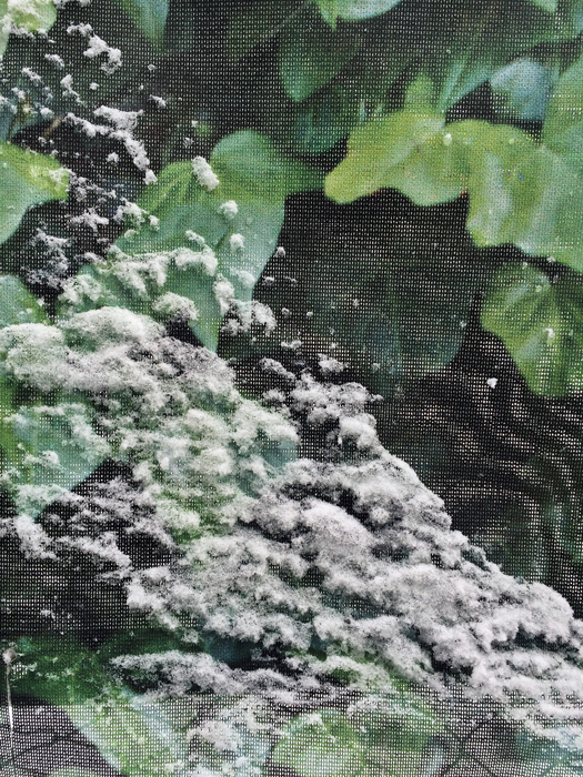 "Sara Maria Salamone,  Snow, Mess, Chainlink,  2015, Digital C-Print, 24"" x 18"""