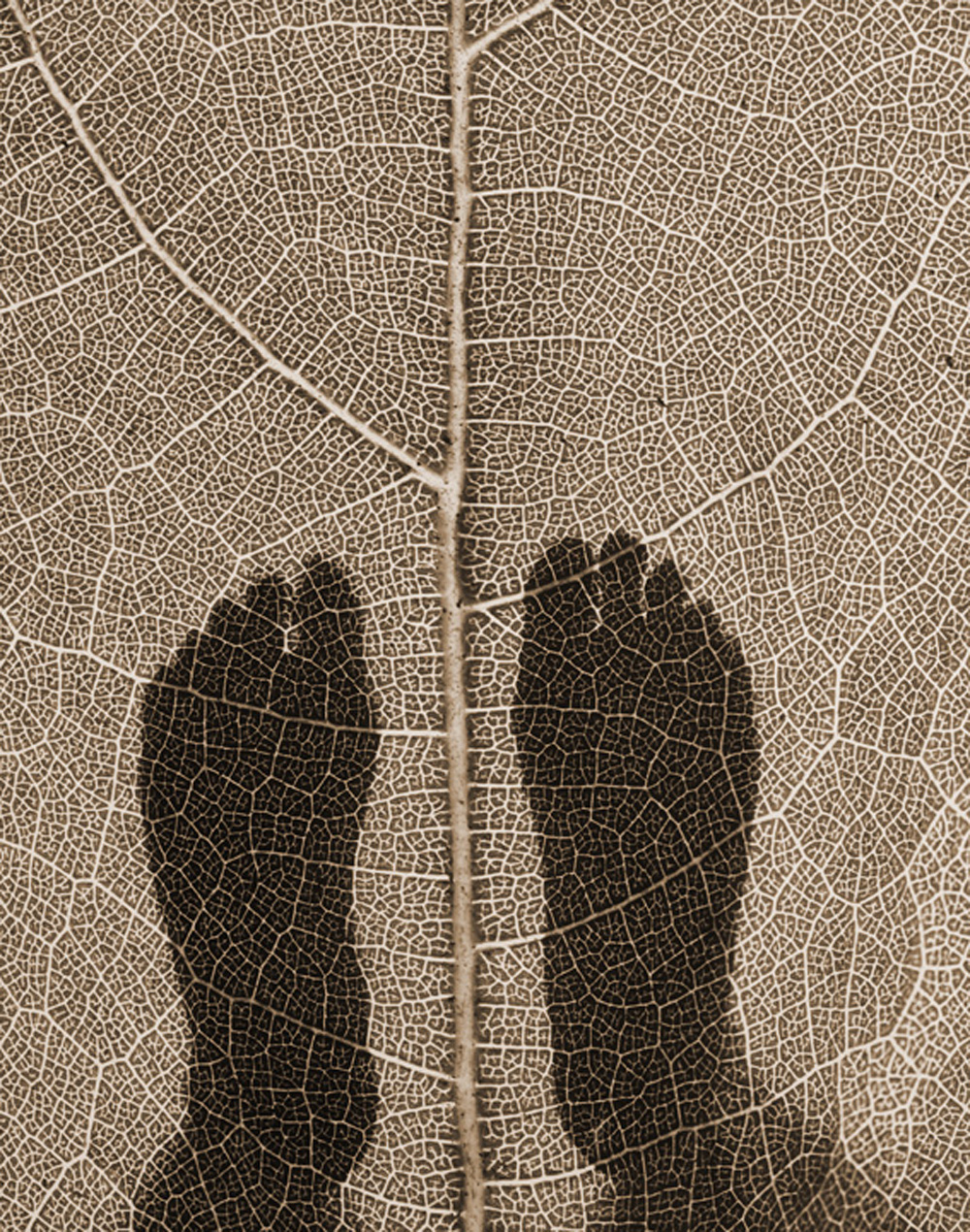 Ron Saunders , Brown Feet Leaf,  2012, Photograph, 25 x 29""