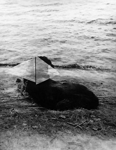 """Tamsen Wojtanowski, Easy Wild , Silver Gelatin Print, 2017, 11"""" x 14"""""""