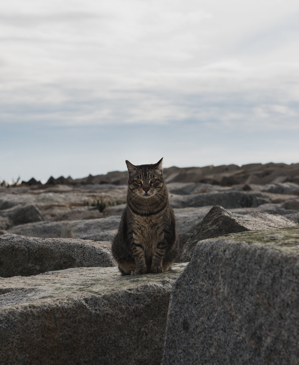 STRAY CAT | BARCELONA
