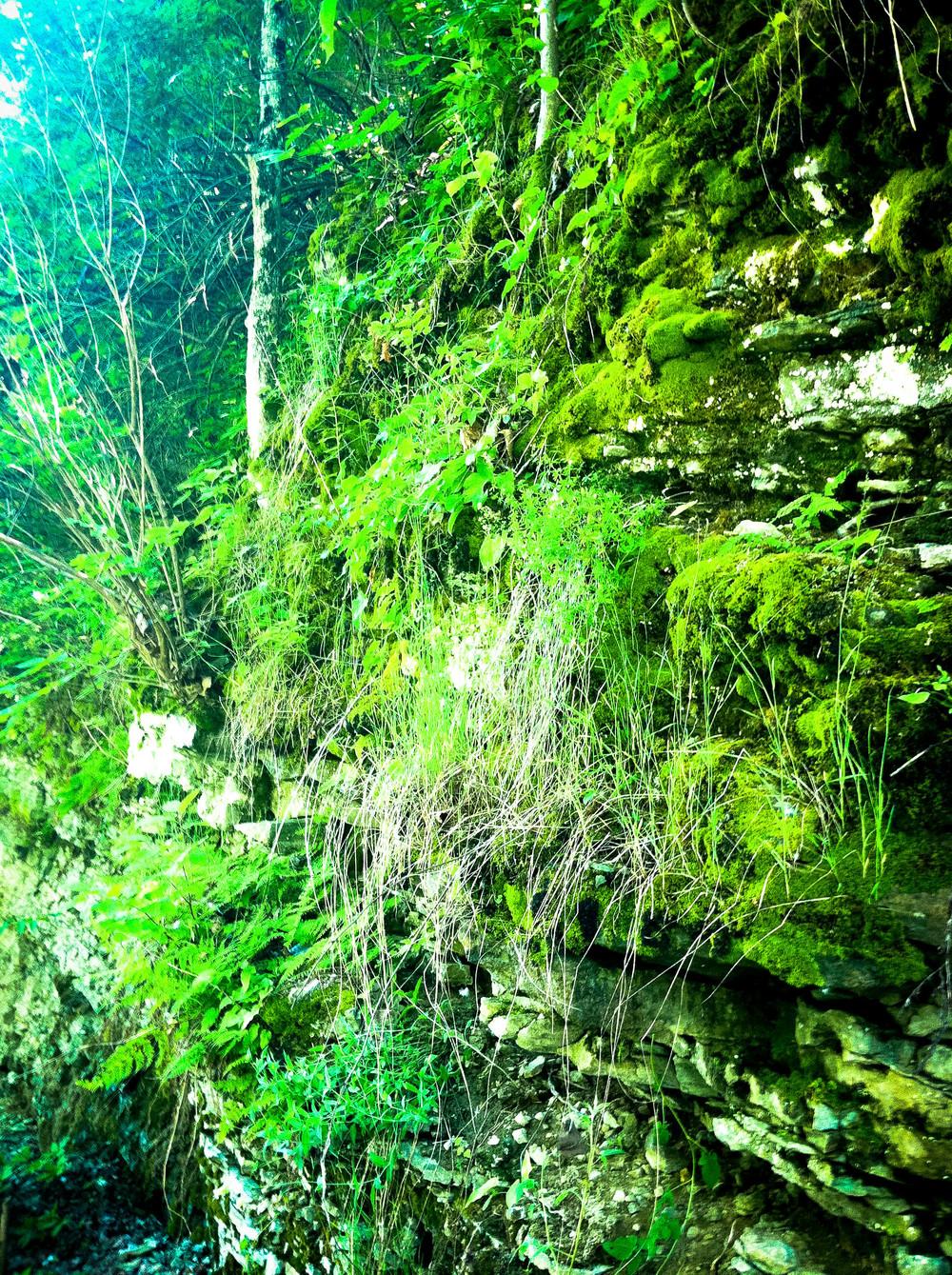 Moss 2.jpg