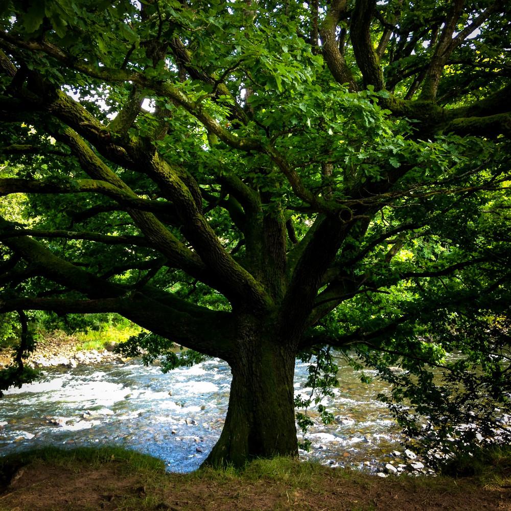Magick Oak