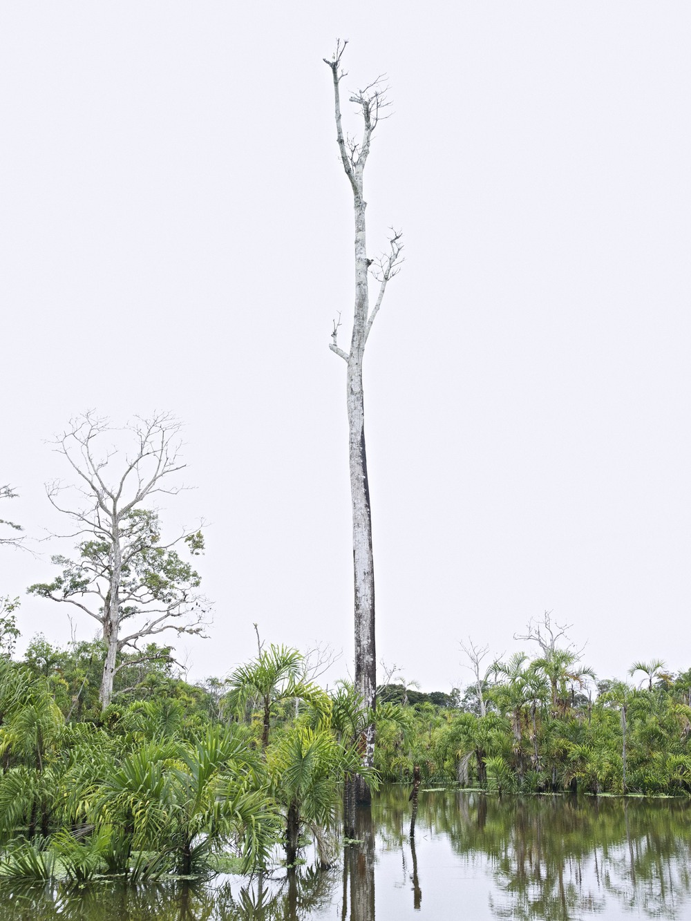 AMAZONAS IV, PERU
