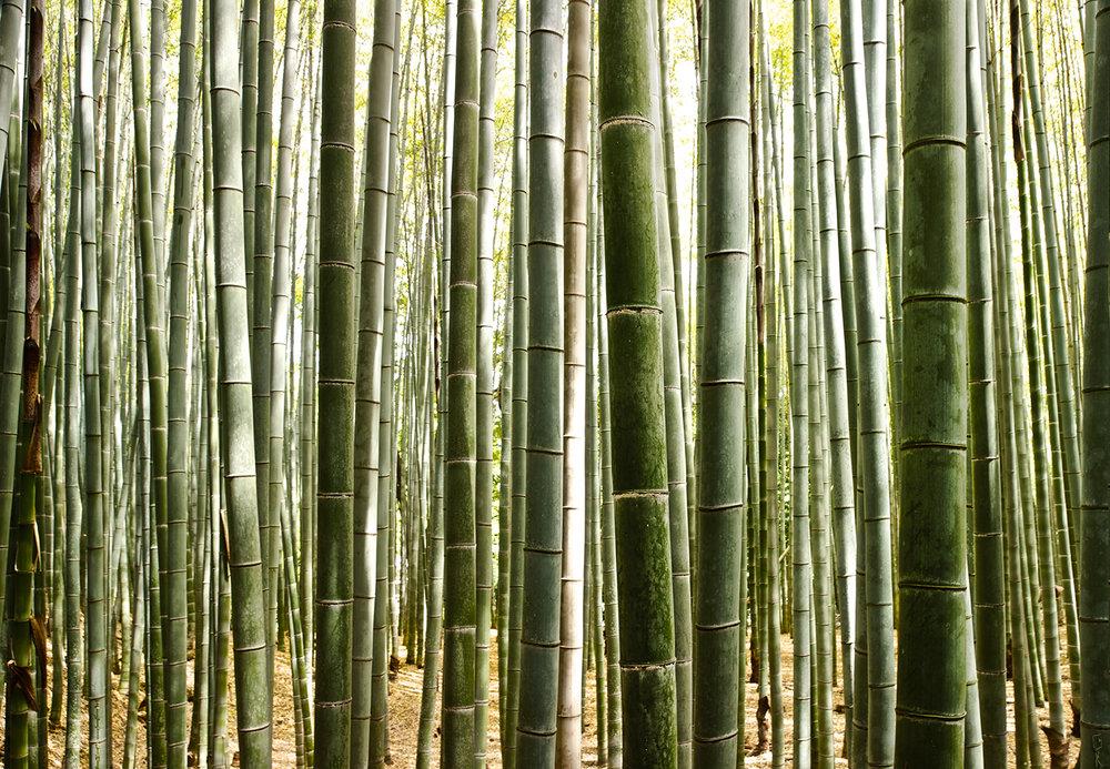 babmbu web.jpg