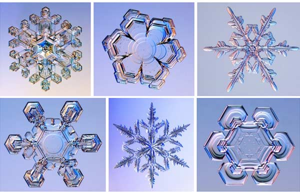 Snowflakes under a microscope.