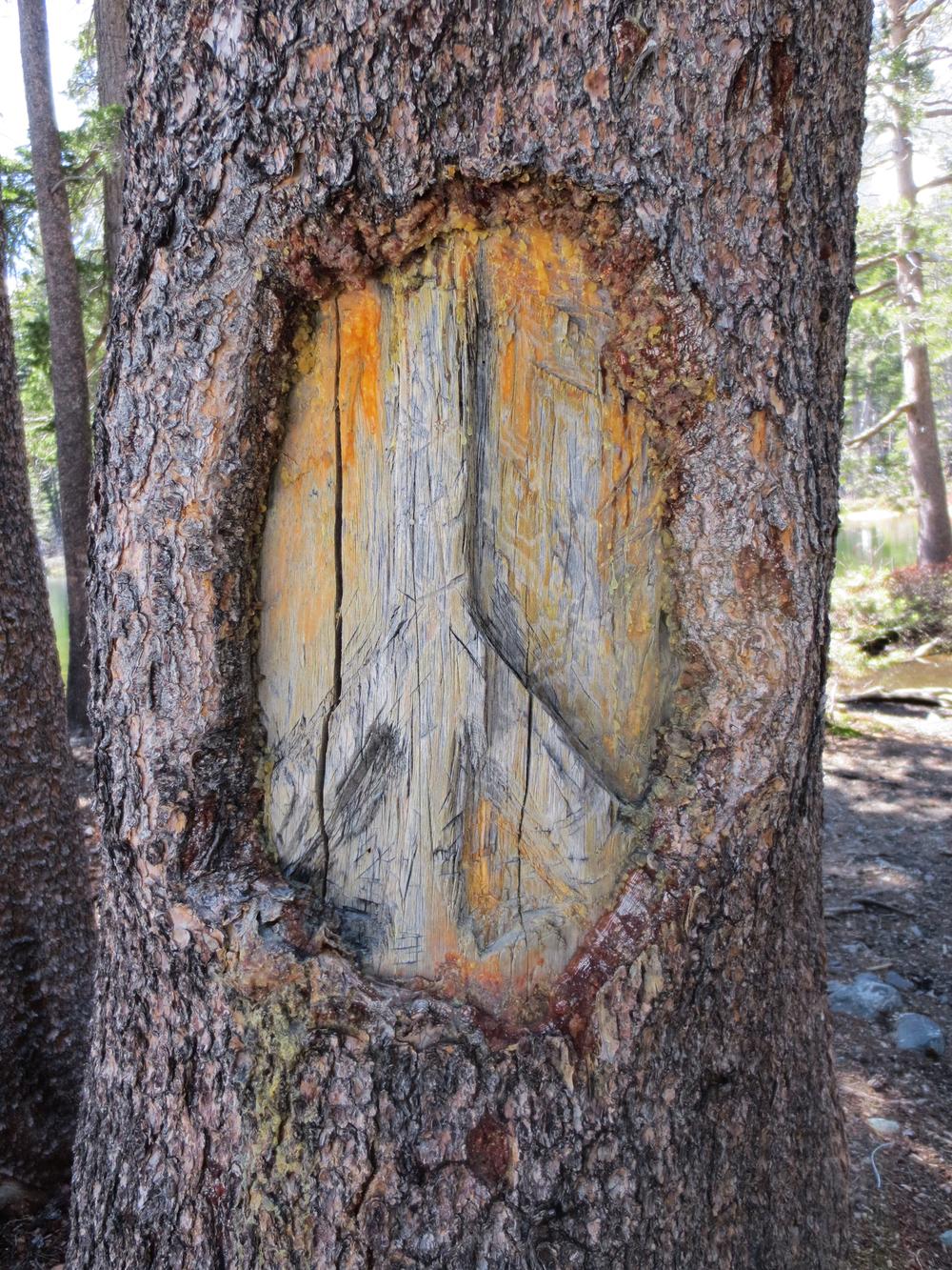 Tahoe-8.jpg
