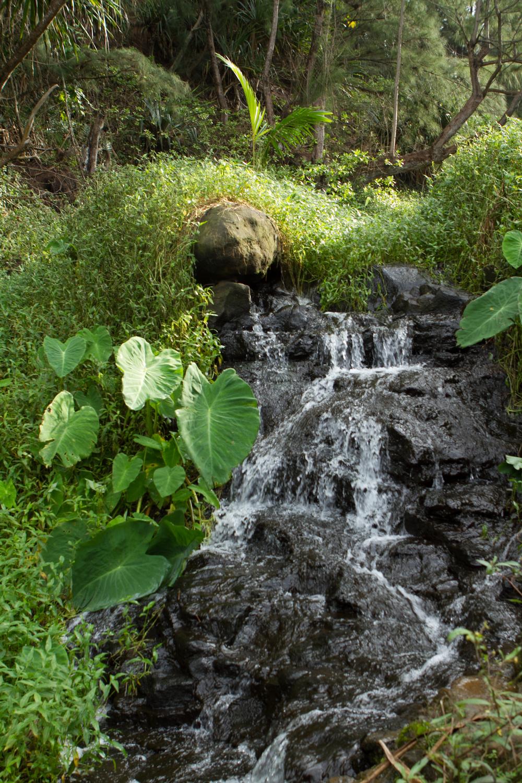 Kauai-5.jpg
