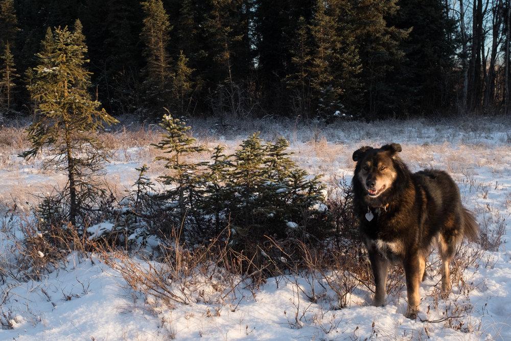 PiperHanson_AlaskaWinter-10.jpg