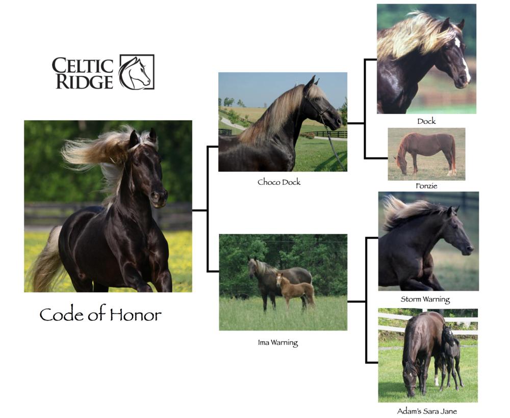 Code of Honor's Pedigree