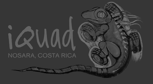 iQuad : ATV Rentals and Tours in Nosara, Costa Rica