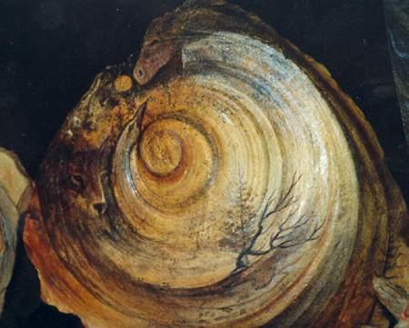 Sacred Spiral by Natalie Rostad Desjarlais