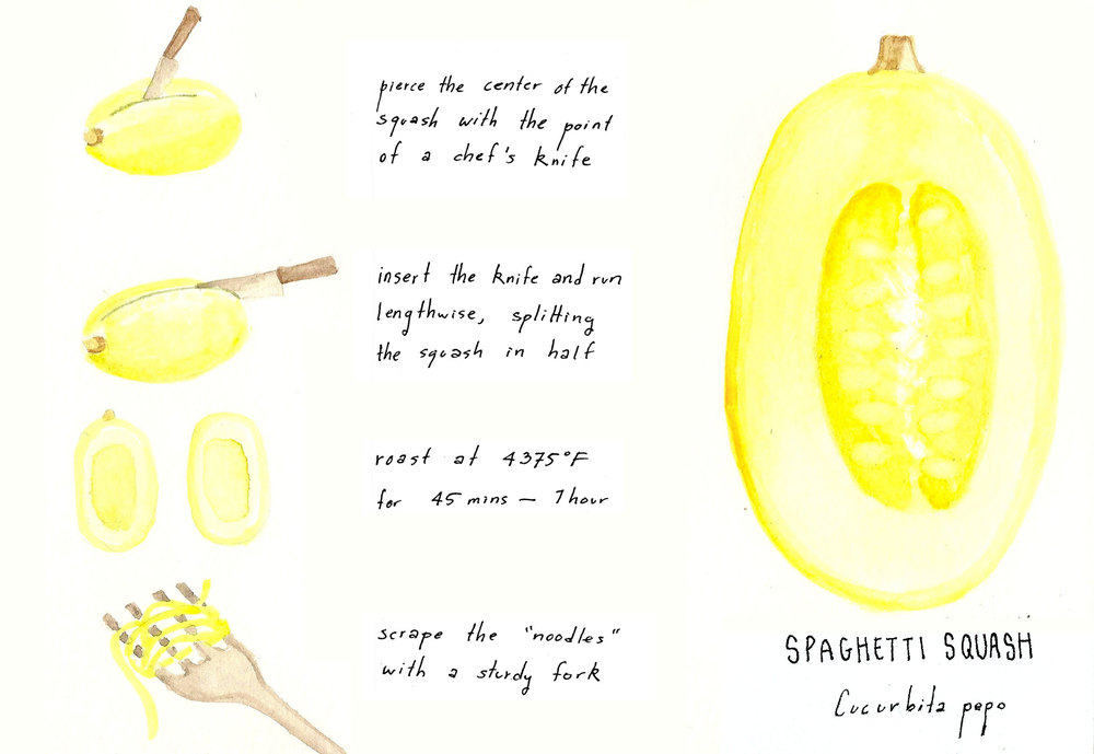 butternutsquash_sketch.jpg