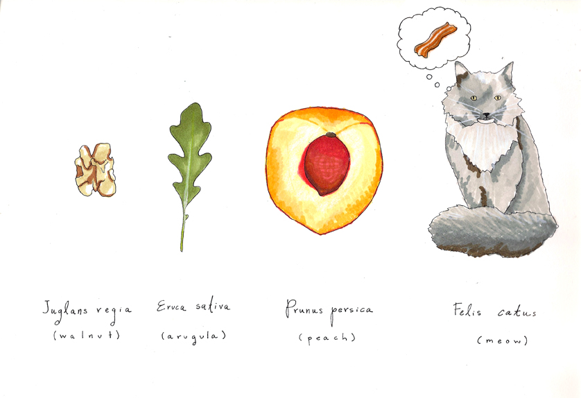 felis catus + ingredients | roux studio