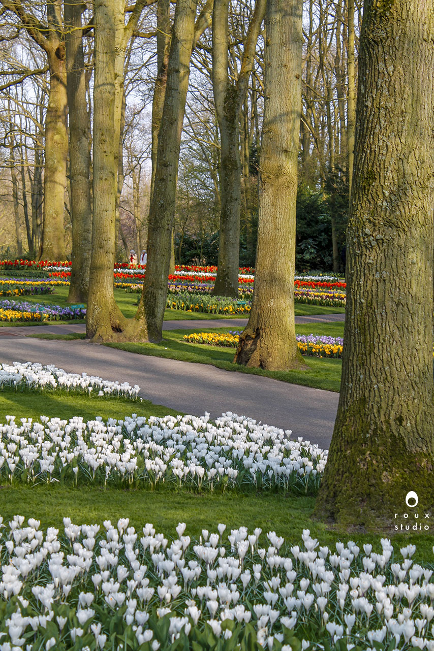 keukenhof gardens  lisse, the netherlands | march 2014