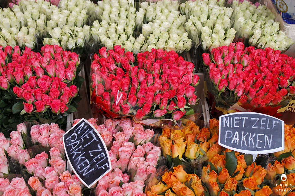 roses  rotterdam, the netherlands | march 2014