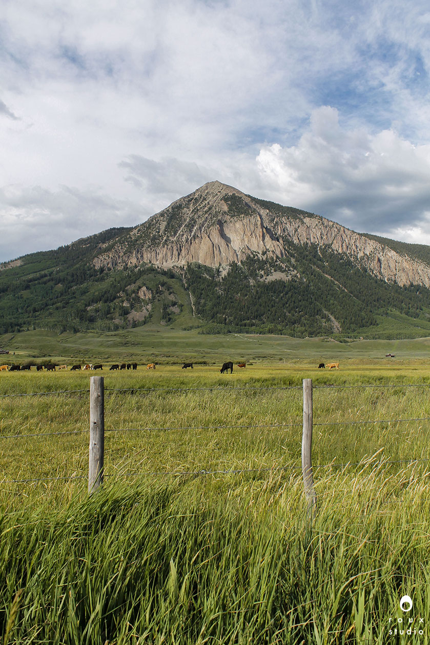 cows grazing near crested butte  crested butte, co | july 2014