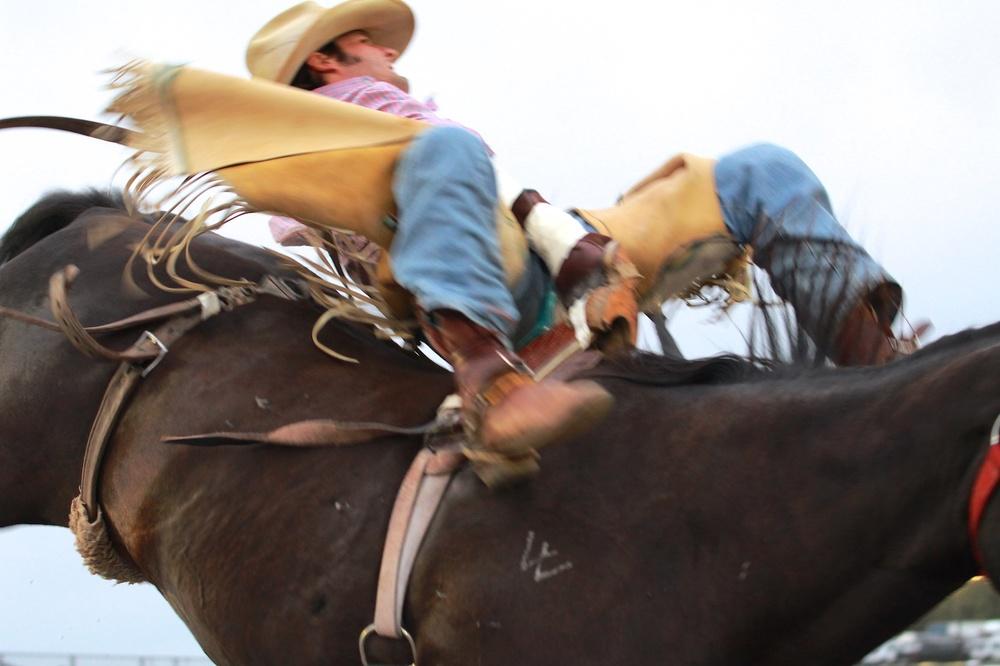 Bucking Bronc and Rider