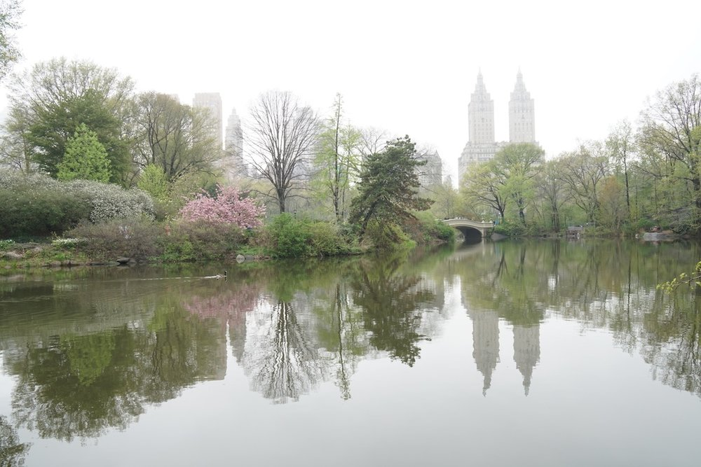 Misty Morning in Central Park.