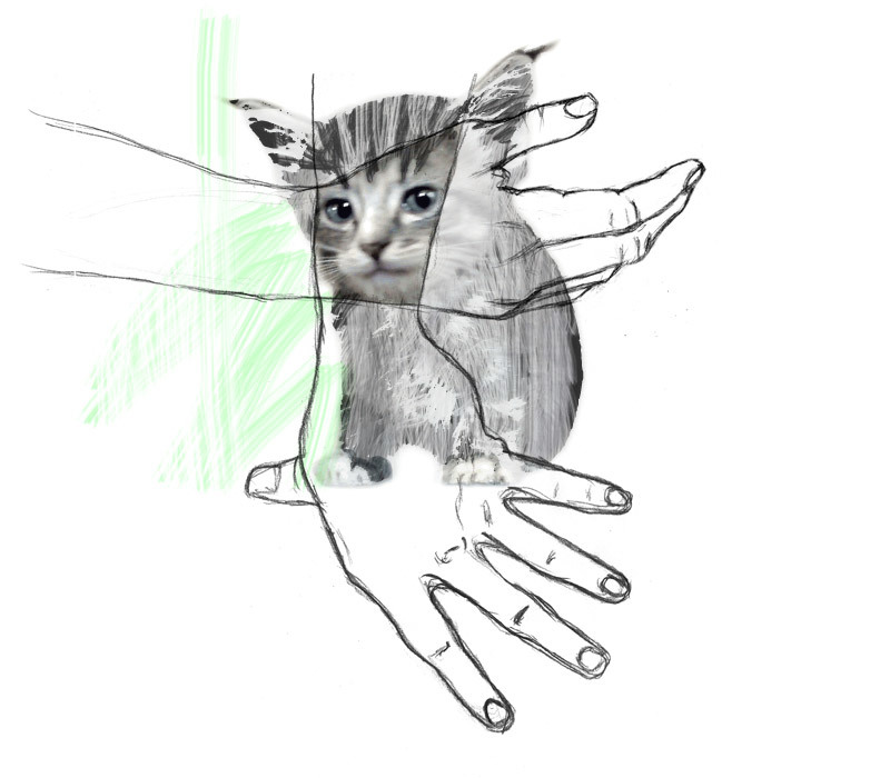 supcicious-kitten1.jpg