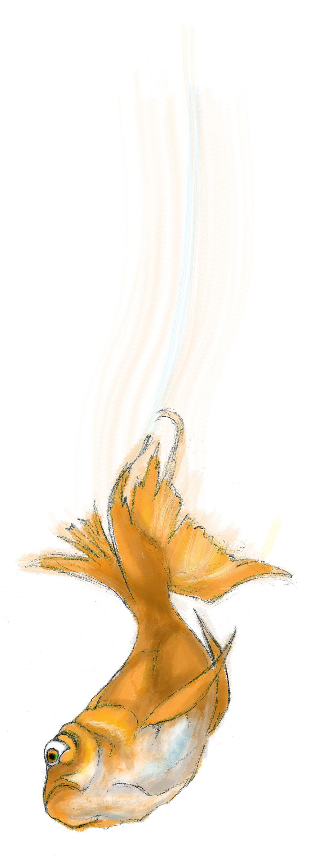 goldfish_v02.jpg