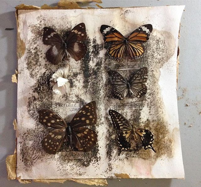 Salvaged a trashed Lepidoptera collection we found in the garbage. @ianthehenderson excised all the wrecked specimens.  #nyctrash is astounding. #garbage #butterfly