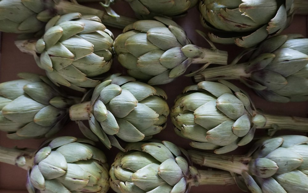They said it could not be done, well we know it could! Local Colorado Artichokes, they are smaller in size but delicious and fun.