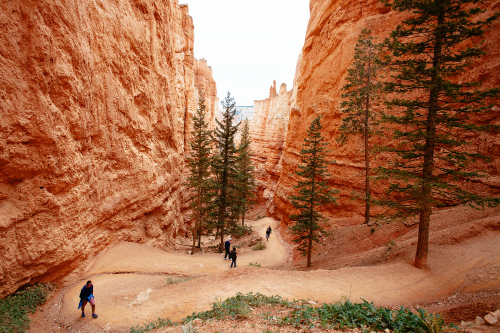Photos of Bryce Canyon National Park by   Liz Devine