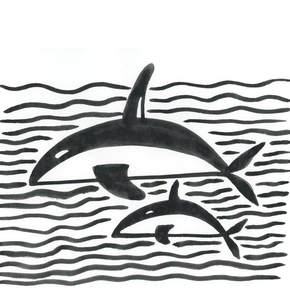 orca gram1.jpg