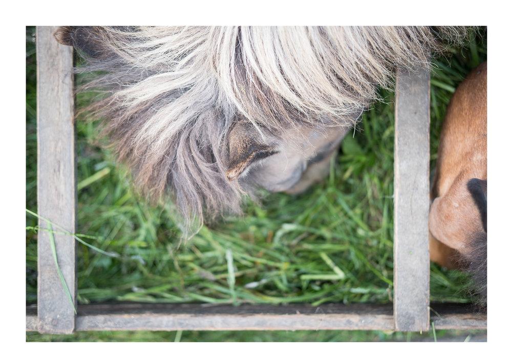 Pferd_4.jpg