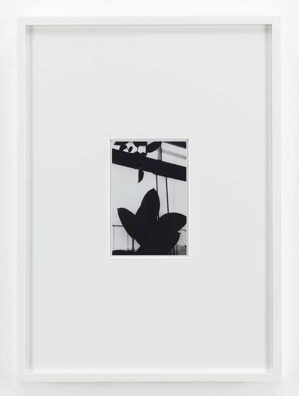 Untitled (Plant) 2011 Unique machine print 15.2 x 10 cm / 6 x 4 in , 45.7 x 33 cm / 18 x 13 in framed
