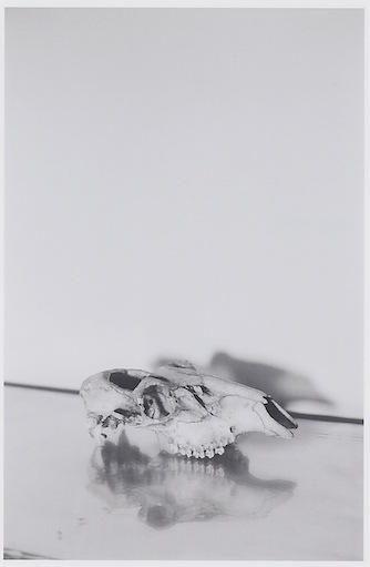Skull into Mirror   2011   Unique c-print   15.2 x 10 cm / 6 x 4 in
