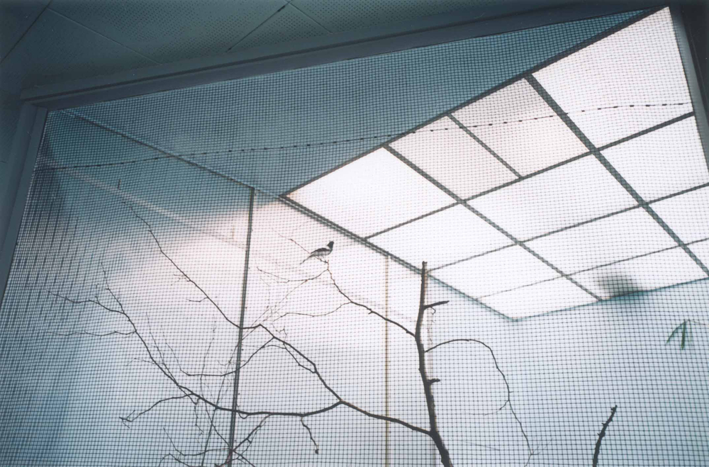Candida Hofer   Zoologischer Garten Philadelphia I 2000   2000   Colour Photograph:  26 x 40 cm