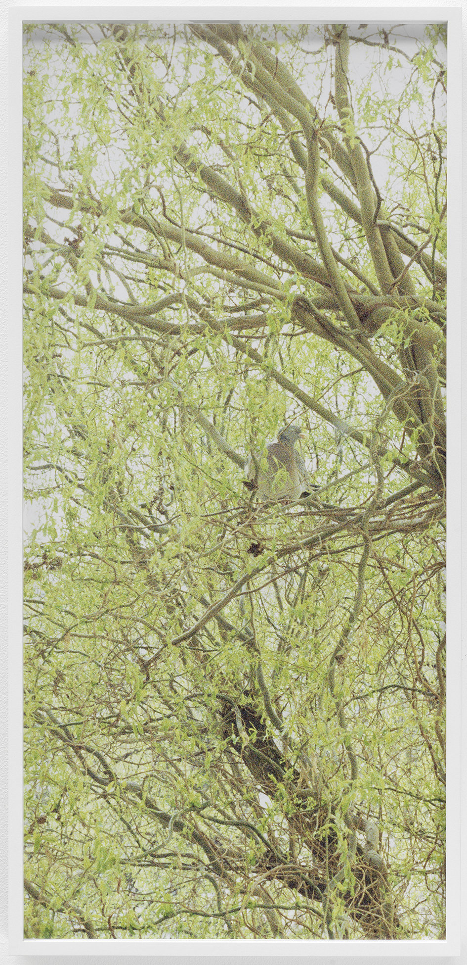 Dove, Kurfürstendamm c-print, framed 2013 72 x 33.5 cm 4/6 + 2AP