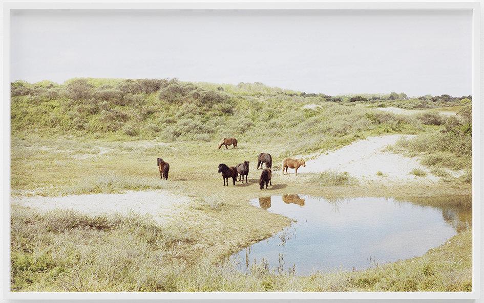 Shetland Ponies Knokke-Heist c-print, framed 2013 62 x 100.5 cm 3/6 + 2AP