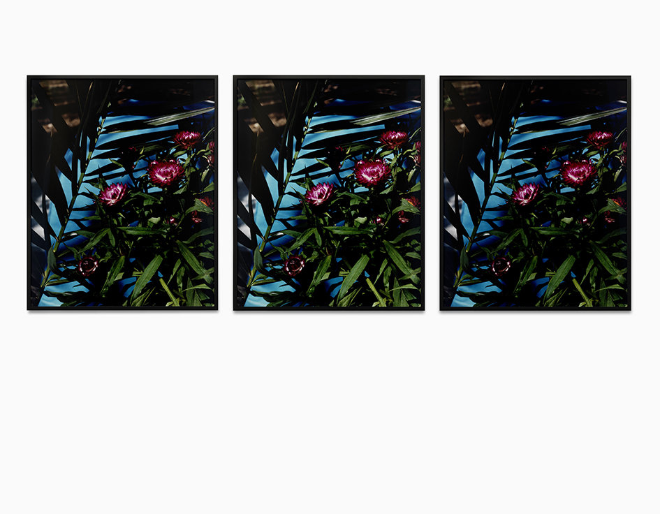 Strawflowers c-print, framed, 3 parts 2013 81 x 65.3 cm 1/5 + 2AP