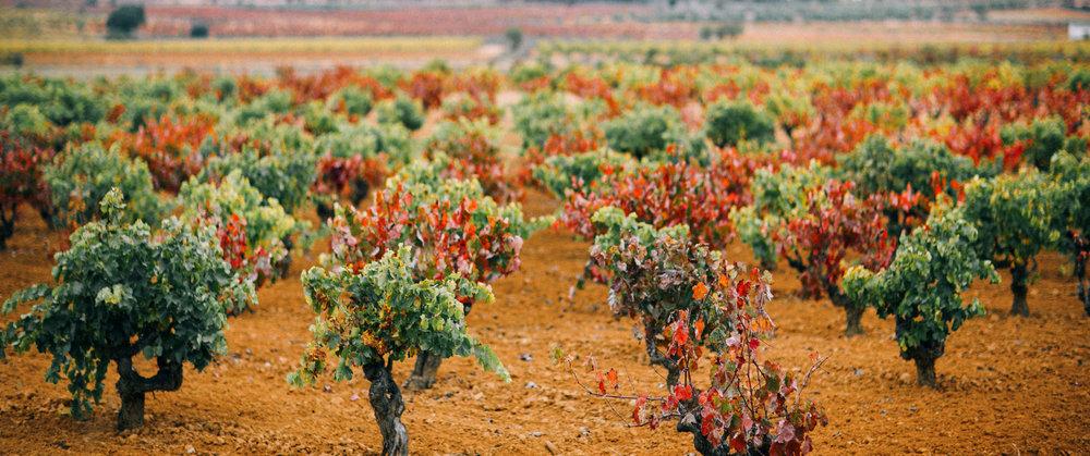 variedades-de-vinos-gratias-de-manchuela-1.jpg