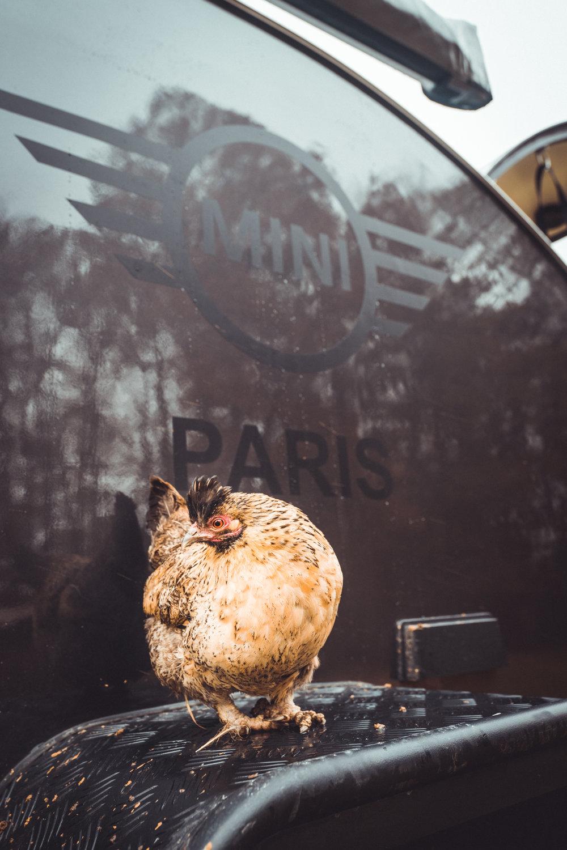 Mini Paris_Clubman Contest 2018_ Florian Leger_SHARE & DARE _ HD_ N°-379.jpg