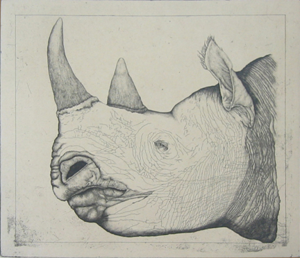 Untitled (rhinoceros)