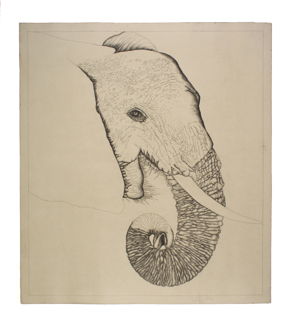 Untitled (Elephant)