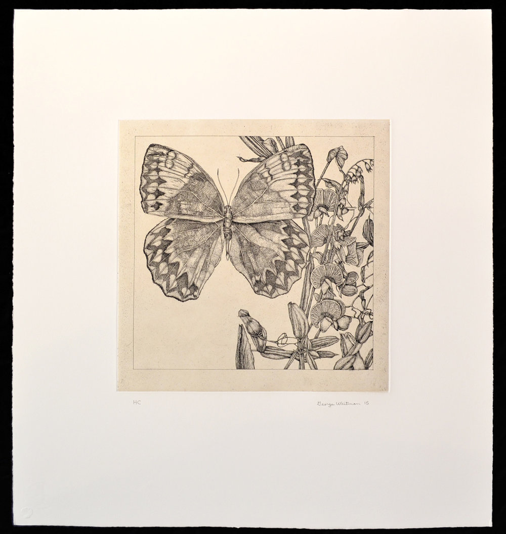 untitled (butterfly 3)