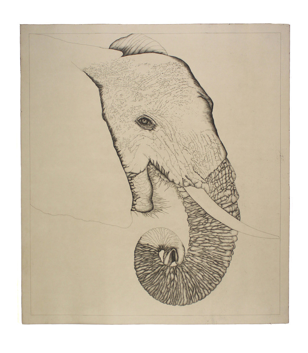 Untitled (Elephant)  Etching with chine collé  40 x 36 inches (image)  46 x 42 (sheet)  2010  Edition 30